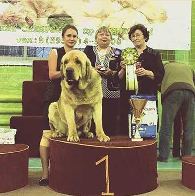 Победитель выставки собак