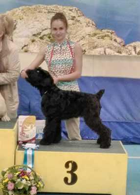 Третье место на выставке собак