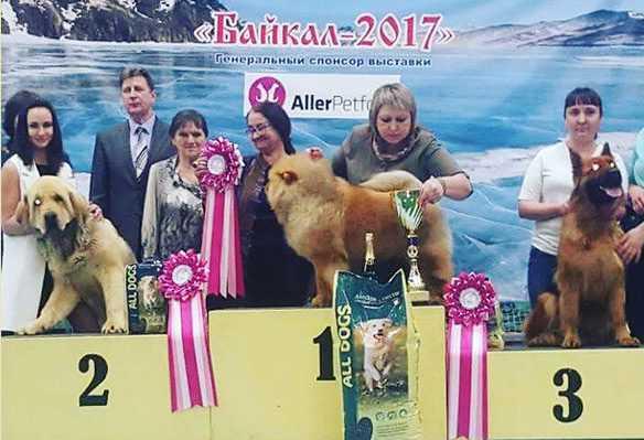 Победители выставки собак