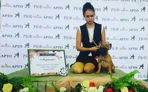 Лучший щенок на выставке