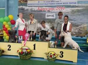 Призеры собачьей выставки