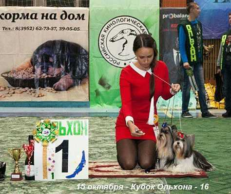 Лучшая пара выставки собак на Ольхон