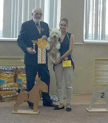 Победа на выставке собак
