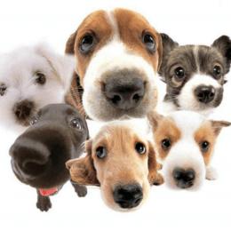 Разные собачки