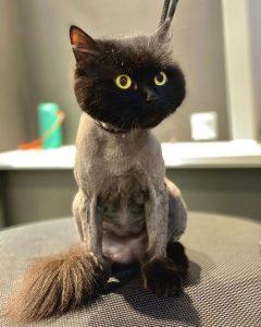 Организм кошек плохо приспособлен к терморегуляции, а уход за шикарной шерстью д...