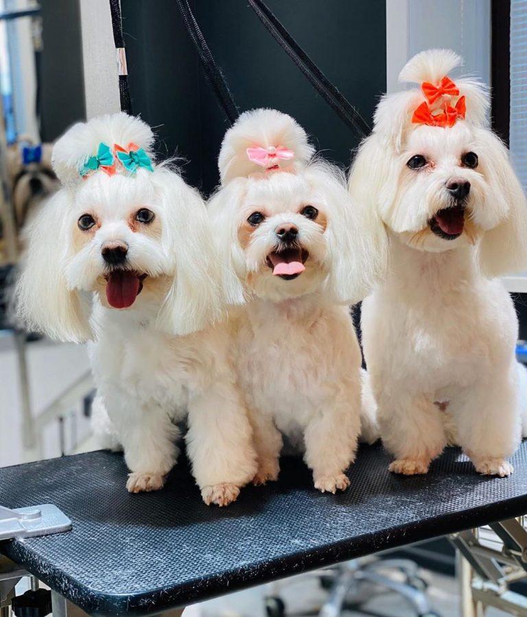Прекрасное белоснежное трио готово ловить на себе восторженные взгляды.  Приглаш...