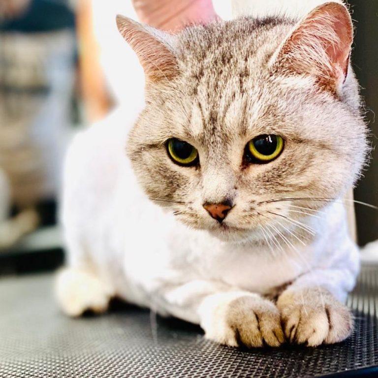 Устали постоянно пылесосить и мыть полы? Вся ваша одежда в шерсти Вашего котика?...