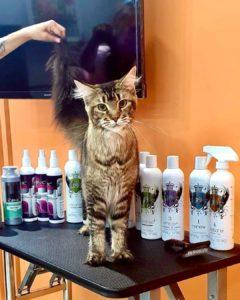 В нашем салоне прошёл мастер-класс по грумингу кошек с абсолютно топовым мастер...