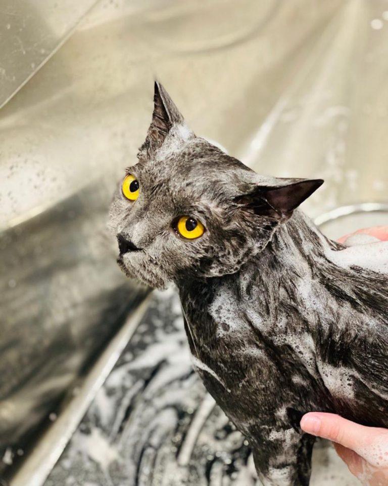 Удивительно красивый котик сегодня приходил к нам  Глаза прямо в душу  Спасибо, ...