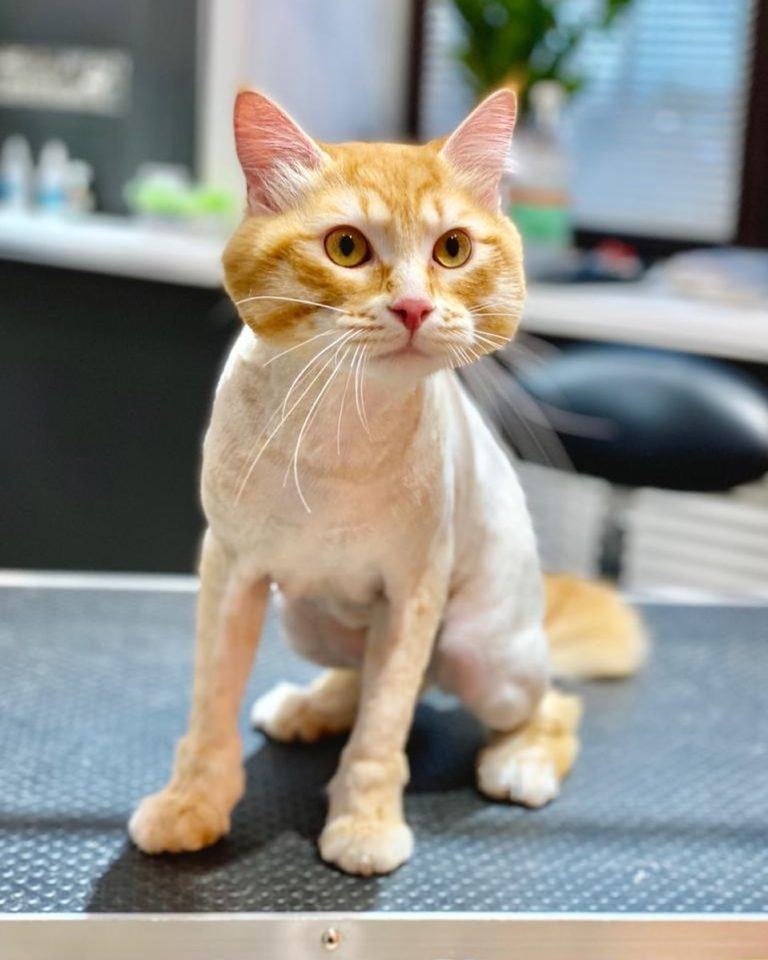 Груминг кошек- нелегкое дело и кошки могут испытать огромный стресс. Именно поэт...