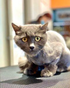Удивительные глаза...  Салон Lapkins предлагает груминг кошек любой сложности   ...