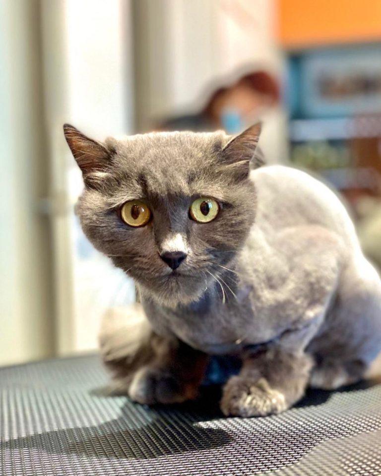 Удивительные глаза...  Салон BESTA предлагает груминг кошек любой сложности   ...