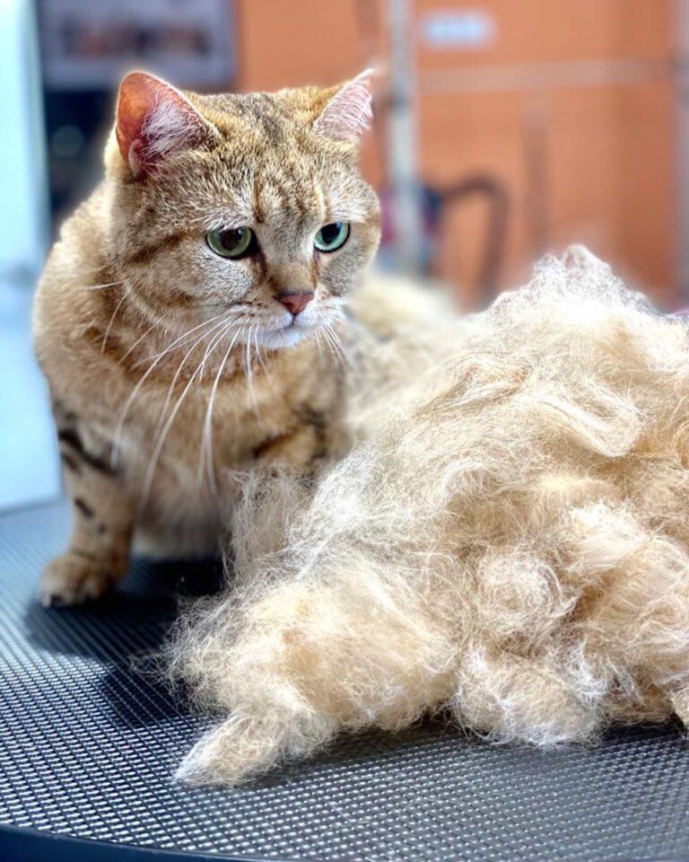 Мы помогли уже большому числу кошек избавиться от ненужной шерсти   Экспресс-лин...