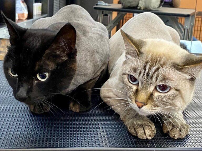 Уход за кошками- это очень нелегкое дело, но очень интересное  Спасибо, что дове...